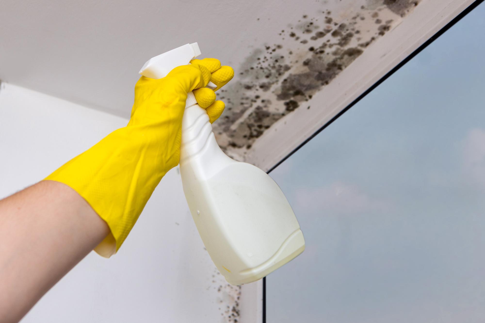 La muffa puo essere rimossa con prodotti per la casa e detergenti